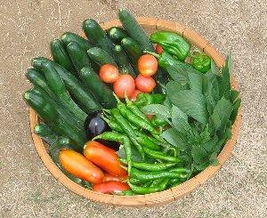 家庭菜園してる人いますか??