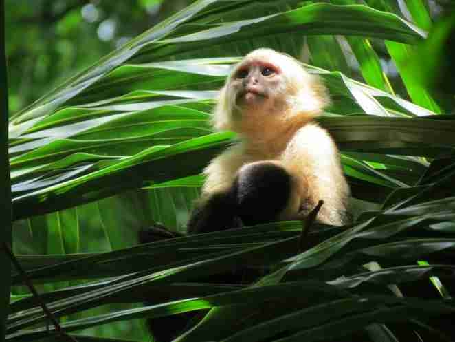 声 な き 動 物 た ち - NPO個人ケイ&リルこの世界のために 全日本動物愛護連合 アニマルポリス 動物愛護党