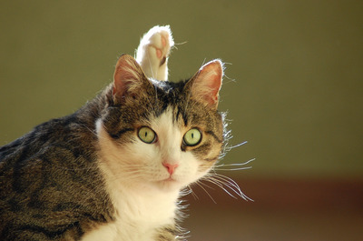 猫と楽しく意思疎通を図る便利で実用的なチャート|| ^^ |秒刊SUNDAY