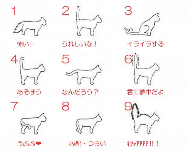 猫の気持ちをシッポで理解できるチャートw