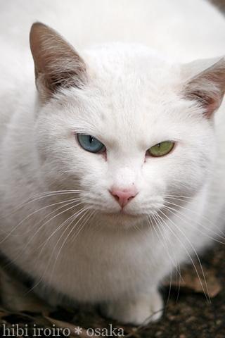 蓮舫が飼ってる猫がどう見てもヤバい件…