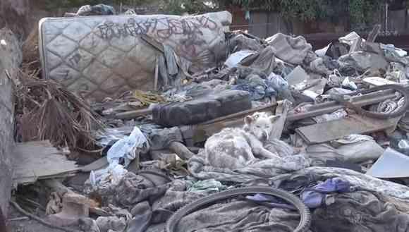 ゴミの山で暮らしていた捨て犬「マイリー」の物語
