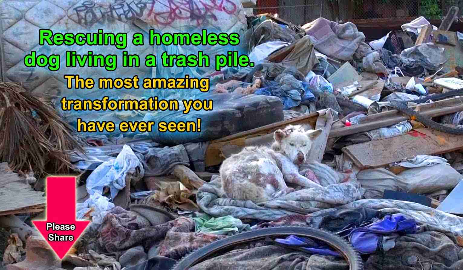 A homeless dog living in a trash pile gets rescued, and then does something amazing! Please share. - YouTube