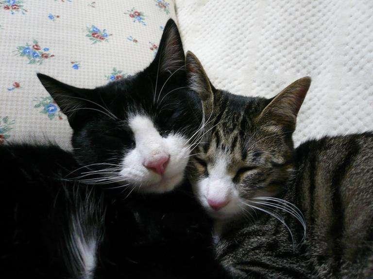 動物愛護センターから新しい家族を迎えた方いますか?