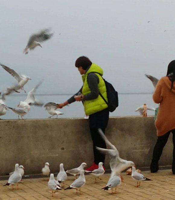 【中国】少女が湖畔をお散歩 → カモメと戯れる → と見せかけてカモメを捕獲!→袋につめて持ち帰り | ロケットニュース24