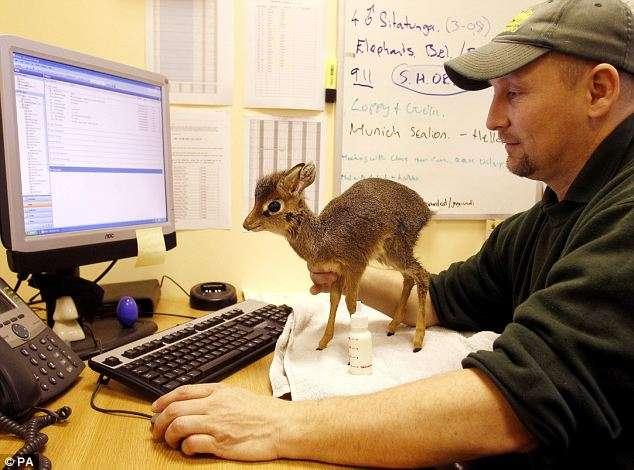 ぬいぐるみが動いてるみたい!全長約20センチ「驚くほど小さなバンビ」