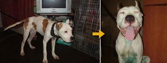 もう一度信じたい。捨てられた犬が新たに心を開くとき。捨て犬たちのビフォア・アフター写真 : カラパイア
