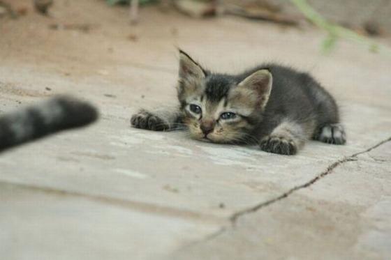 ウトウトしてる猫達が可愛すぎてたまらんwww