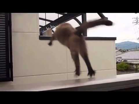 猫 ジャンプ失敗 - YouTube