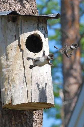 この跳び方って…重力を無視した動物たち