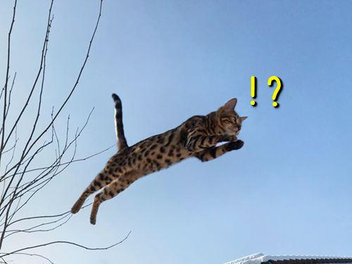 この跳び方って…重力を無視した動物たちの写真16枚:らばQ