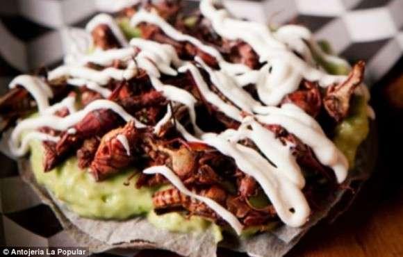 【閲覧注意】昆虫食始動。ニューヨークでコオロギハンバーガーが販売開始