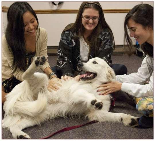 海外の大学で導入され始めてる「セラピー犬」が羨ましい