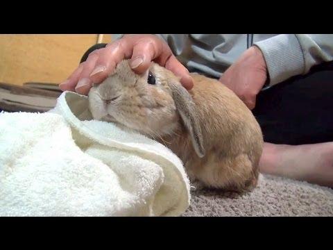 鳴きすぎるウサギ (おねだりダンダンウー!!)  The cry of a rabbit (dan-dan-woo!!) - YouTube