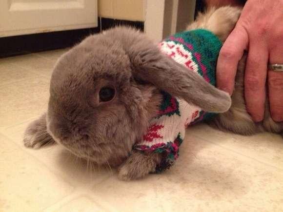 人間が着たらダサすぎるかもだけどっ!クリスマスムードたっぷりのセーターを着たアニマルたちがきゃわわ♪ | Pouch[ポーチ]