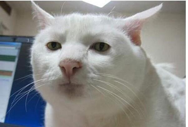 「瓶詰めネコ」の写真をSNSにアップロードした女性、大炎上