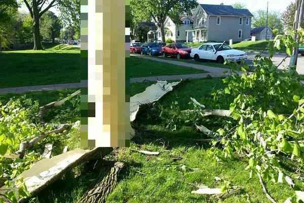 木に落雷した後の状態があまりに意外過ぎると話題に|| ^^ |秒刊SUNDAY