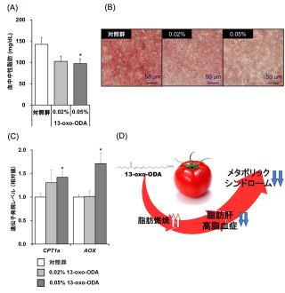 トマトを食べれば痩せられる!? -京大ら、新発見の成分で肥満改善効果を実証 | マイナビニュース