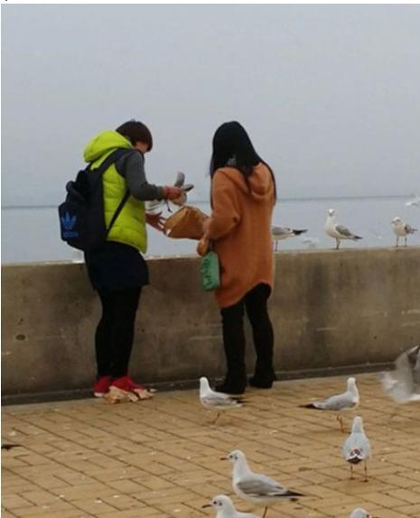 【中国】少女が湖畔をお散歩 → カモメと戯れる → と見せかけてカモメを捕獲!→ 袋につめて持ち帰り