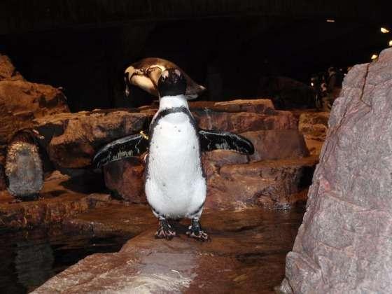 【画像】 ペンギンのレントゲンが衝撃的すぎると話題wwwwwwwwwwwwwwwww