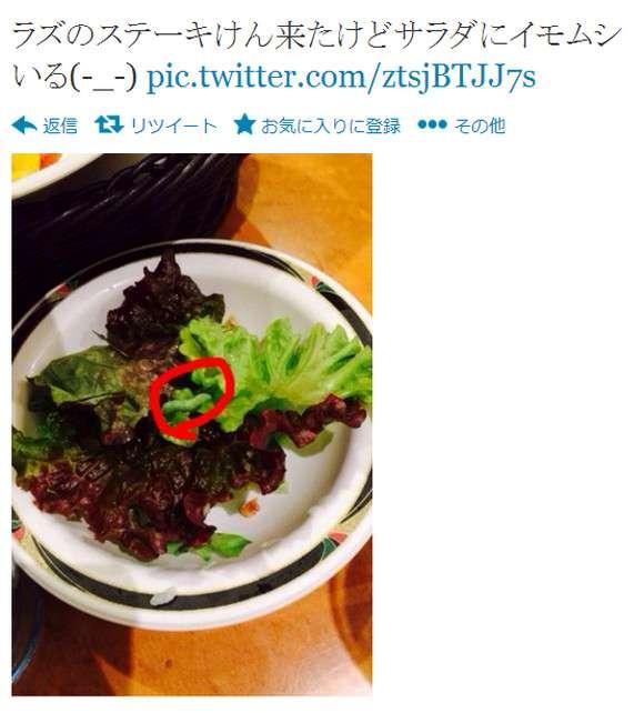 『ステーキけん』のサラダに芋虫が混入 / 客「本日2度目のイモムシ笑」「イモムシパワーw半額になったwww」 | ロケットニュース24