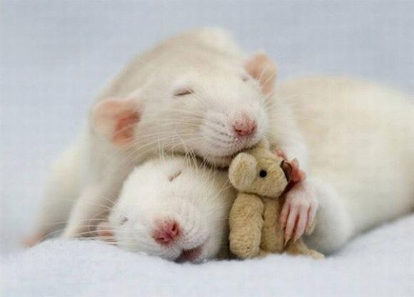 家の中に住んでるネズミにお菓子をあげたら、お返しにチョコをもらったww