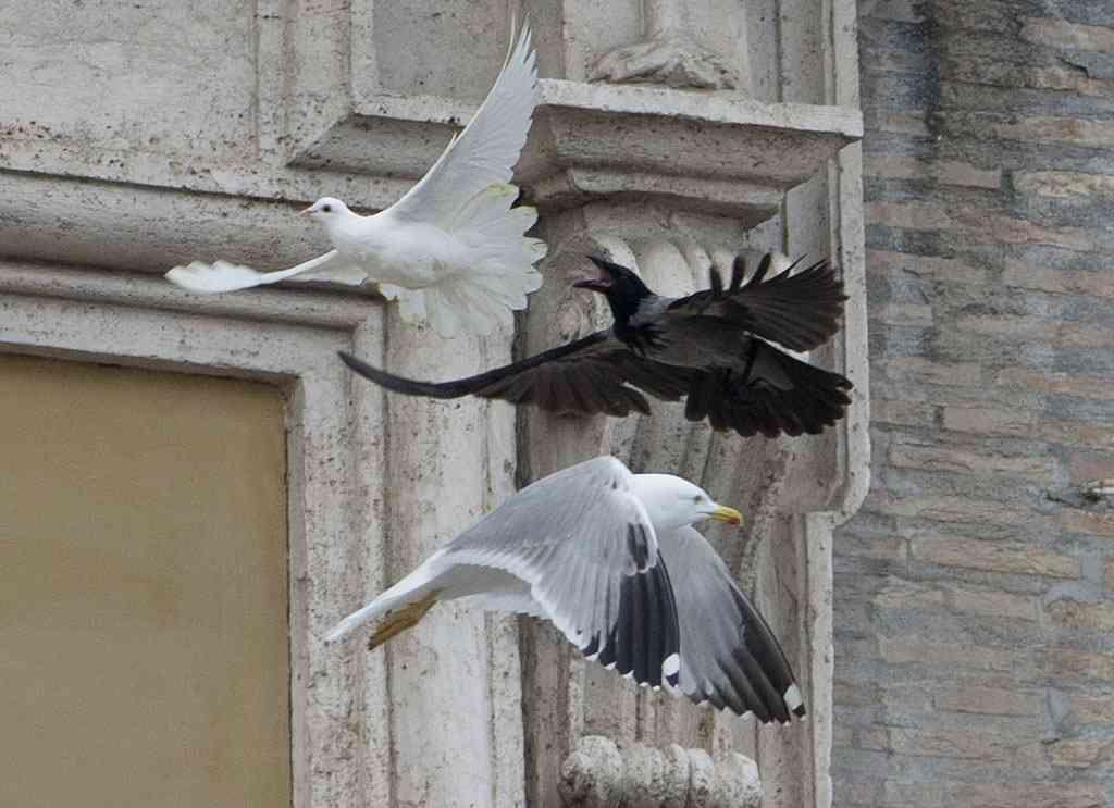 ローマ法王が世界平和を願い放ったハト→信者が見守るなかカラスに襲われる