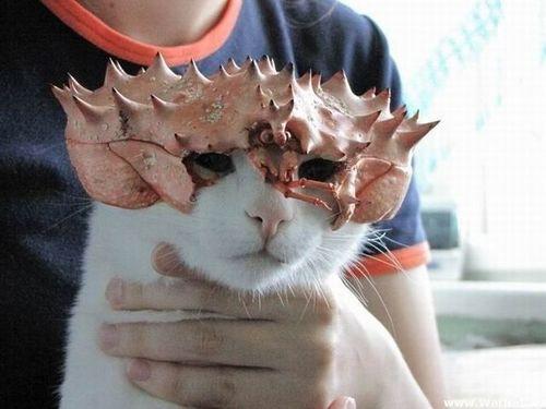 愛猫を守る「キャットアーマー」が登場ww
