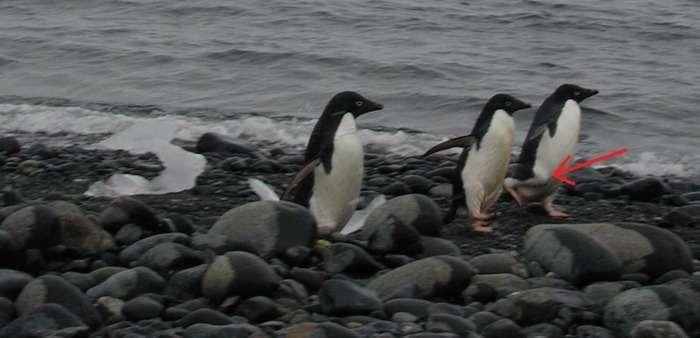 ペンギンのレントゲンが衝撃的すぎると話題www