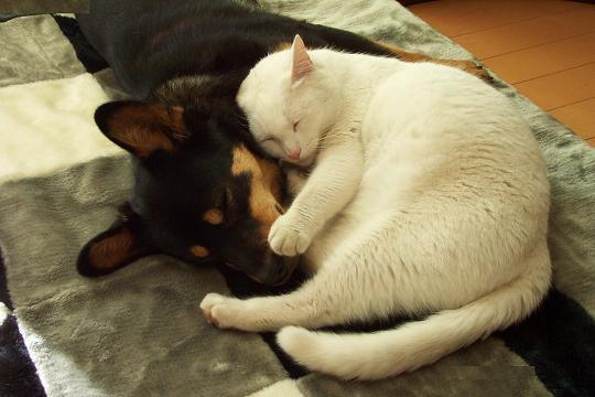 """瀕死の""""親友""""猫を犬が救う!茂みの前で吠え続け飼い主に助けを求める"""