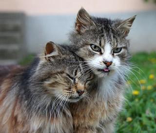【かわいすぎ注意】いろんな動物たちの熱烈キス画像