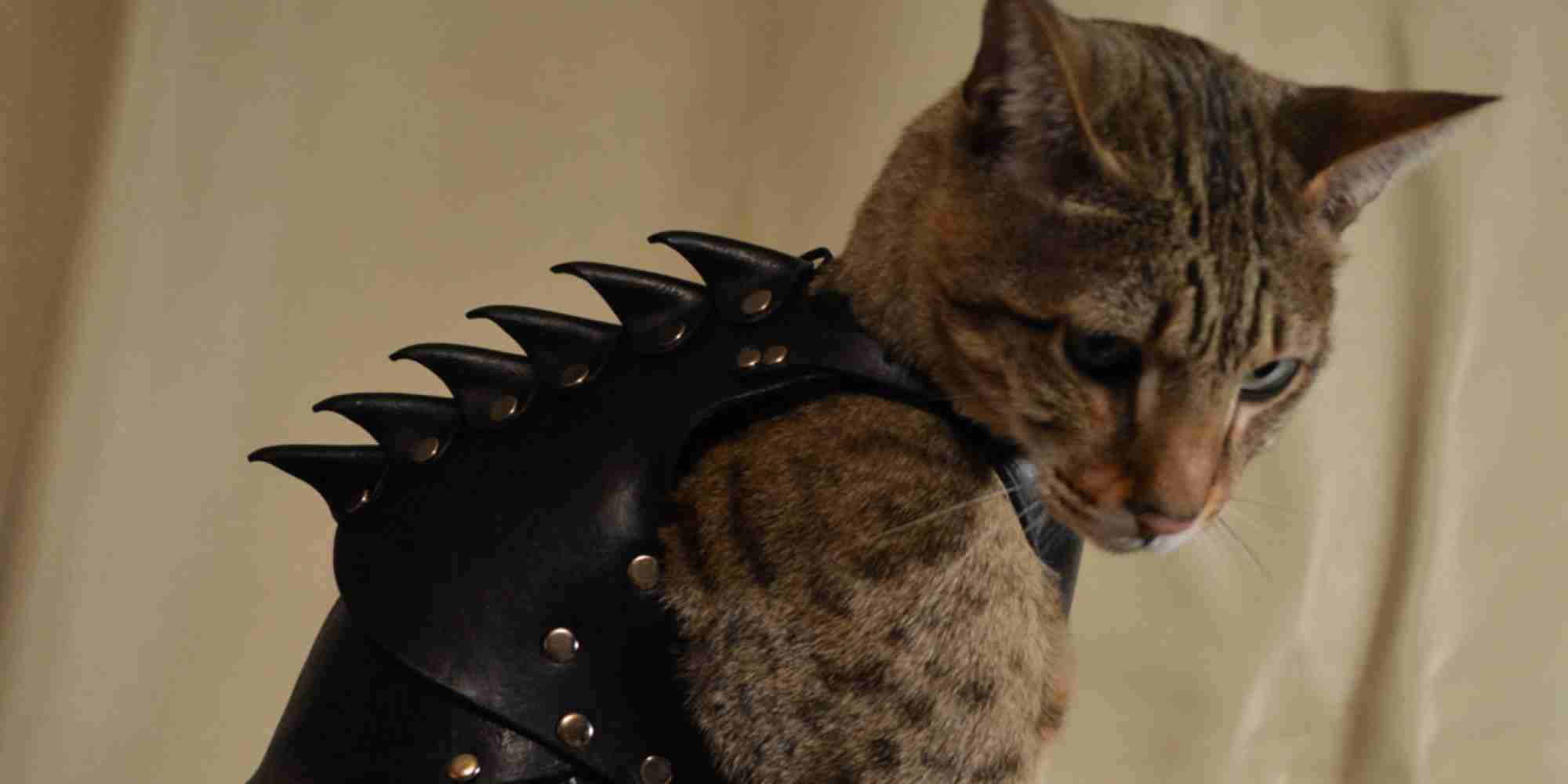 Cat Battle Armor Is Battle Armor For Your Cat (PHOTOS)