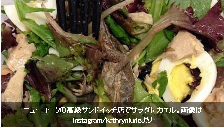 【閲覧注意】ニューヨークの高級サンドイッチ・チェーン店のサラダにカエルが!
