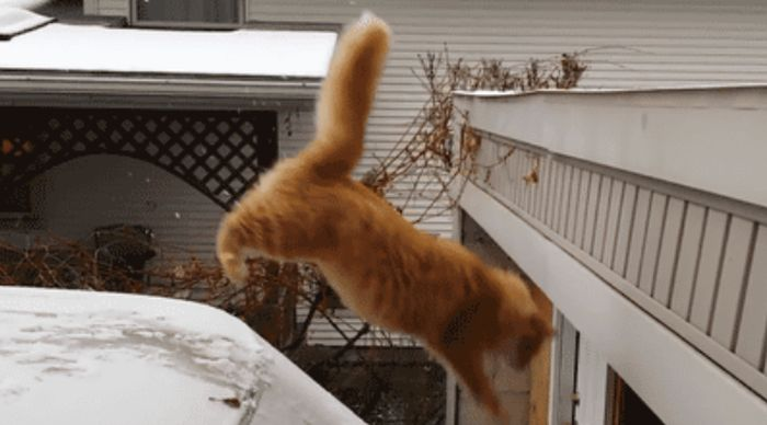These Animals Suck at Jumping (27 gifs)