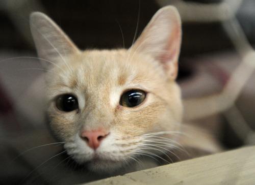 【画像】刑務所に子猫4匹が住み着いた結果…
