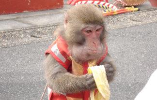 【マジかよ】サルにバナナをあげるのはめっちゃ相性悪い事が判明wwwwwwwwwwww : はちま起稿