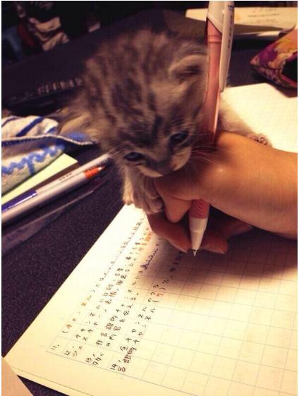 勉強を手伝う猫が可愛いと話題に