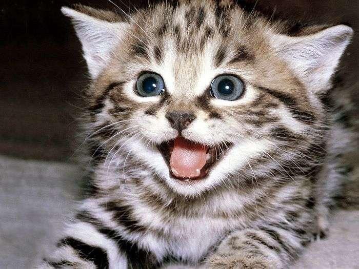 なぜ猫は可愛いのか