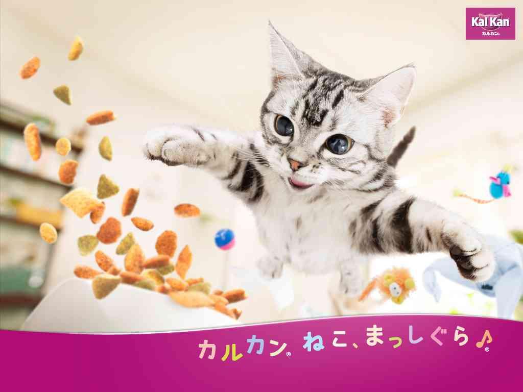 """猫好き、キュン死!?「カルカン」新CM『振り回されて』篇、2/22 """"猫の日""""オンエア開始"""