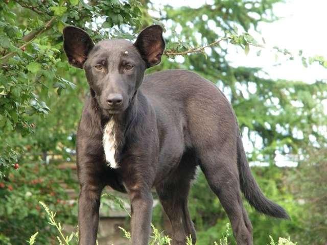 プーチン大統領に顔が「そっくりな犬」が発見され、海外メディアたちが光速で報道