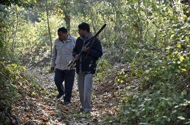 「人食いトラ」の犠牲者9人目、インド北部 写真1枚 国際ニュース:AFPBB News