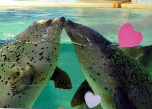 静岡県「下田海中水族館」で、キスするアザラシが人気