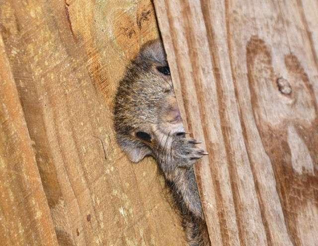 いろいろな動物の視線を感じる画像:ハムスター速報