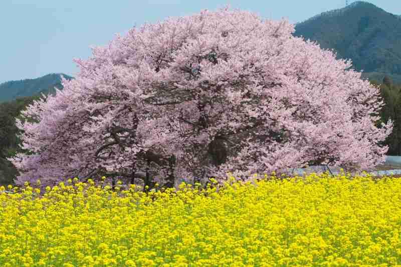 春から環境が変わる方いますか?