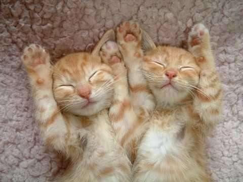 ネコ好きには堪らない!?「ネコ付きマンション」が流行中!