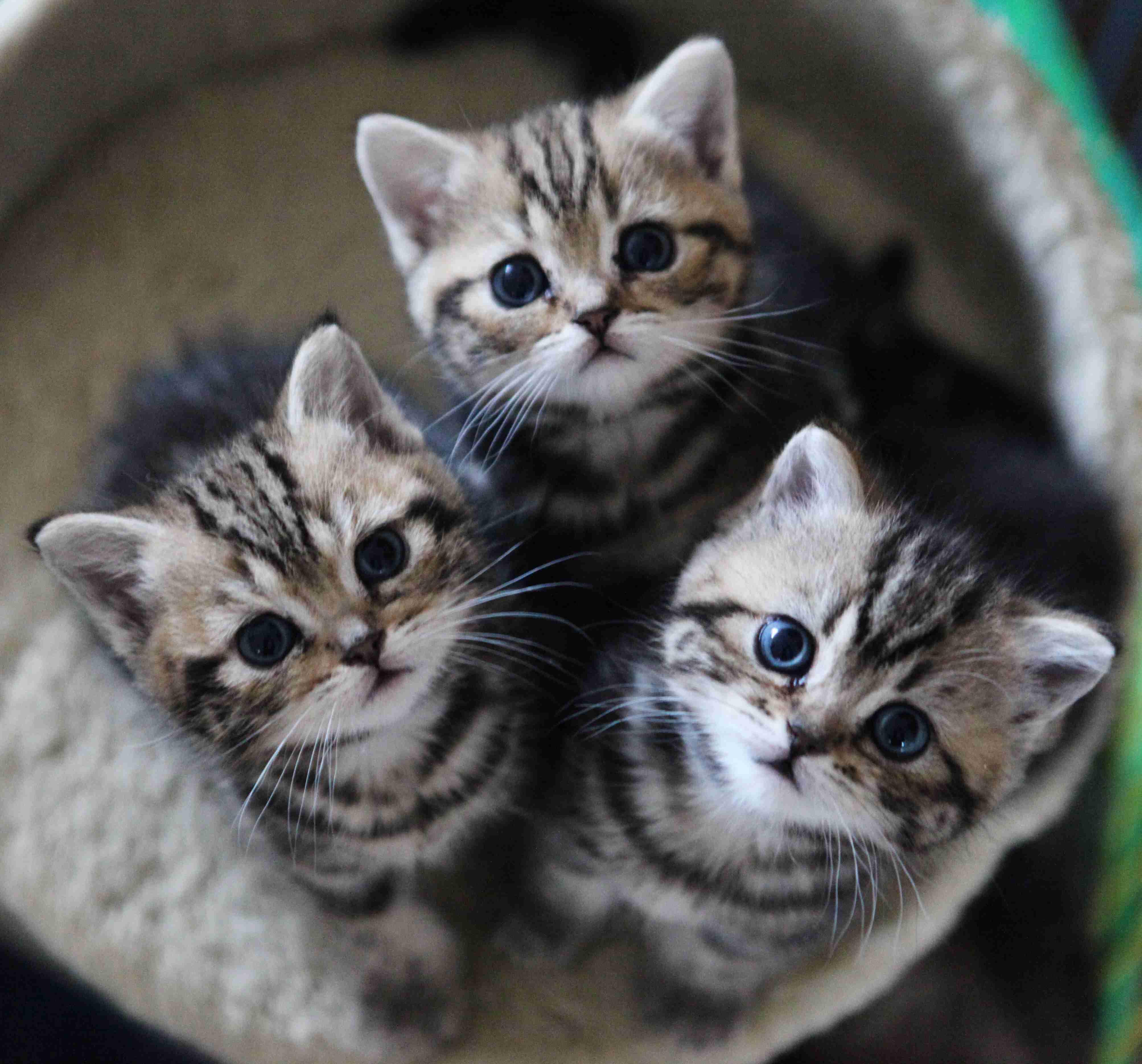 里親のふりをしてネコを集めていた男性、実は食べるために集めていたことが判明