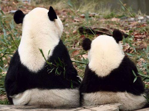 笑っちゃうほどそっくり…あまりにも似ている動物の親子たちの写真22枚:らばQ