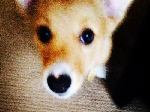 まさしく愛の使者…ハートの鼻を持つ犬・猫たちの写真いろいろ
