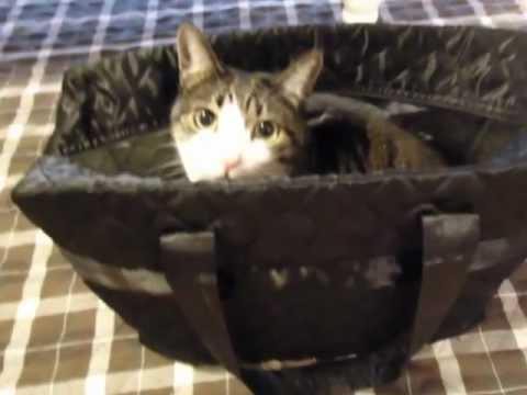 なんとなくしあわせ...な猫~We're happy cats - YouTube