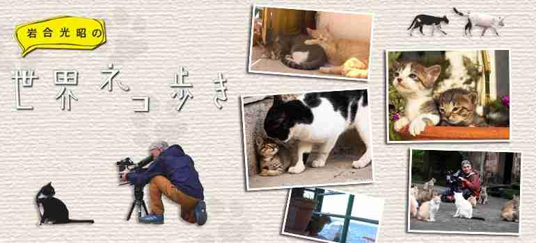 岩合光昭の世界ネコ歩き - NHK